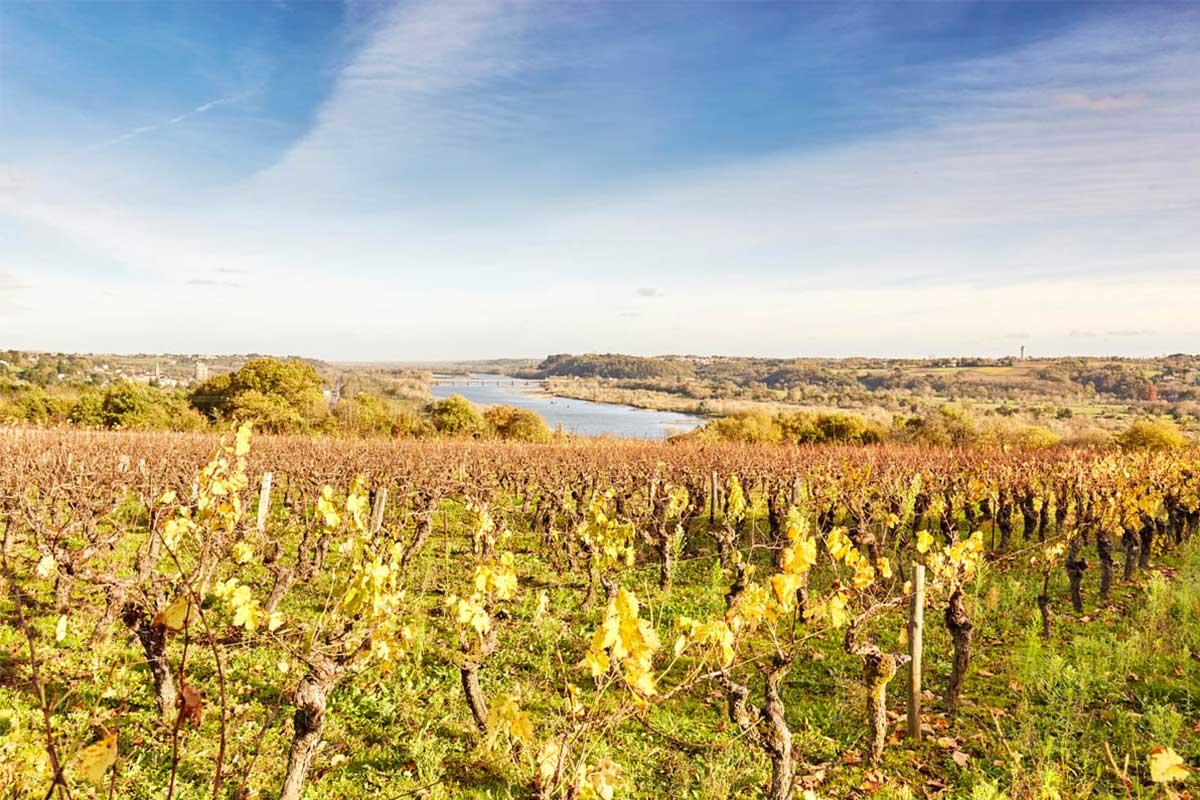 Vignes des Génaudières