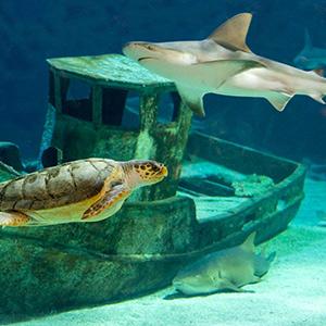 Les requins de l'Océarium du Croisic