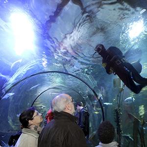 Aquarium Tunnel de l'Océarium du Croisic