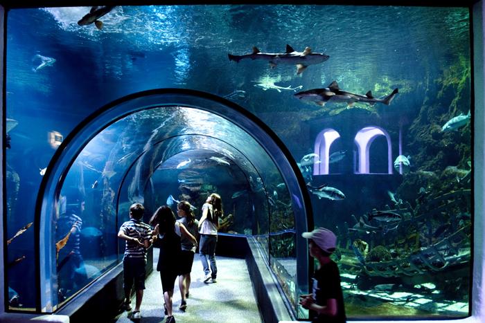 Ocearium Le Croisic