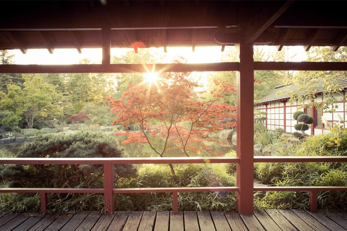 ïle de Versailles et son jardin japonais