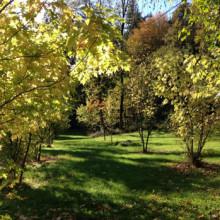parc-du-plessis-chateaubriant.jpg