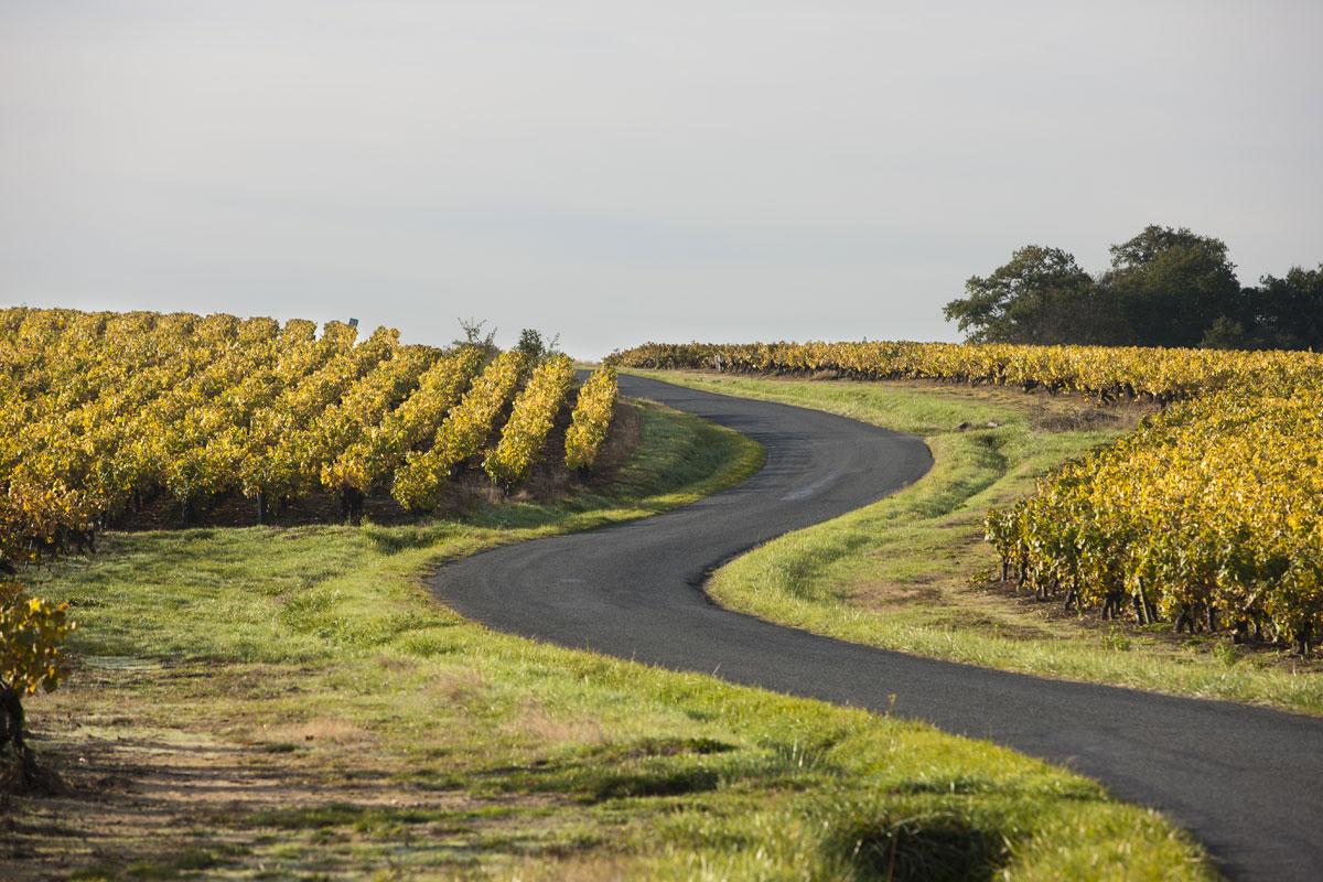 Route au milieu des vignes