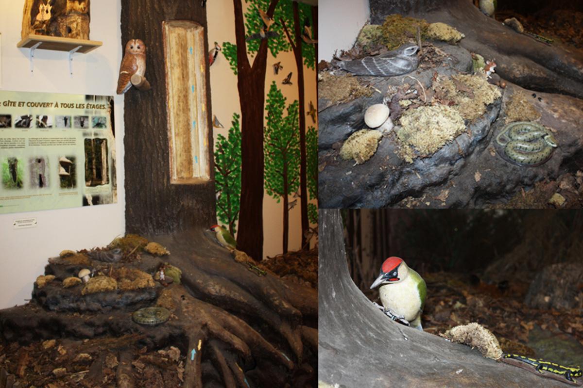 Arbre aux oiseaux de la forêt du gâvre
