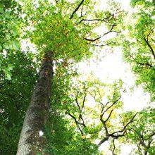 Forêt du Gâvre musée benoist
