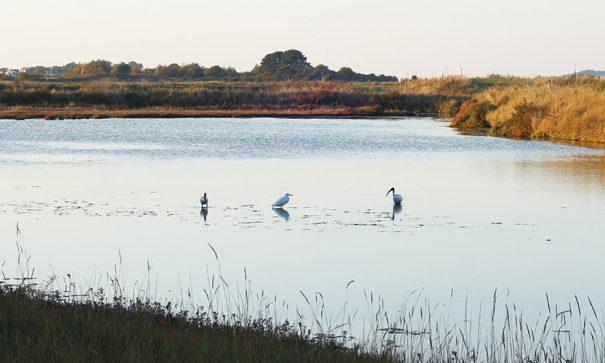 Balade dans les marais salants de Rostu à Guérande Loire-Atlantique