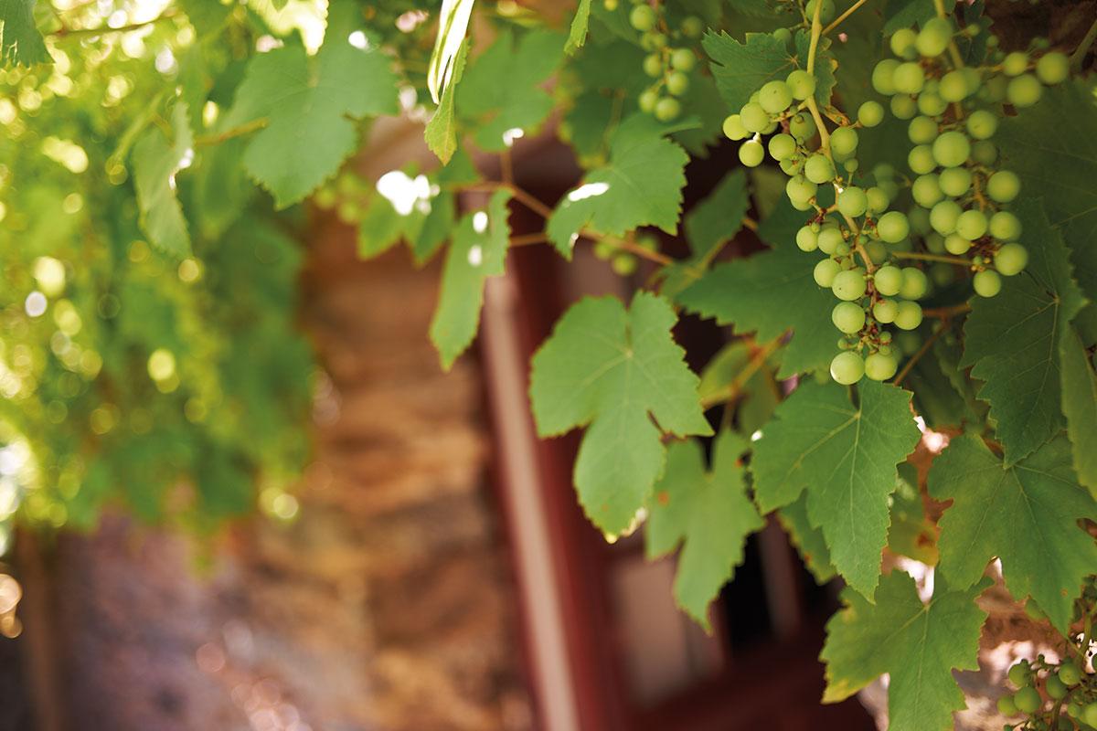Balade dans les vignes du domaine des hautes noëlles en Loire-Atlantique