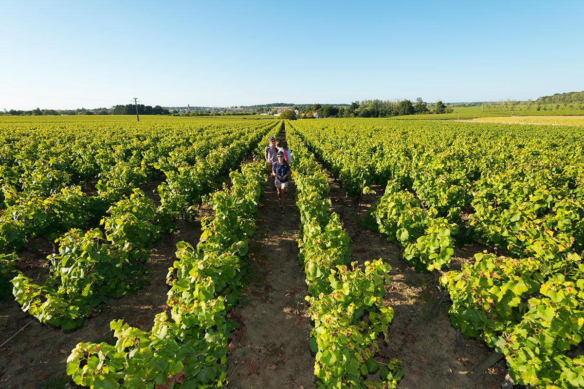 Vacances dans le vignoble avec une découverte des vignes du domaine des hautes noëlles