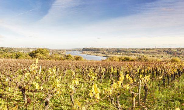 Vignoble nantais Le Celliers en Loire-Atlantique, domaine viticole Muscadet, Alexandre Lamoureux