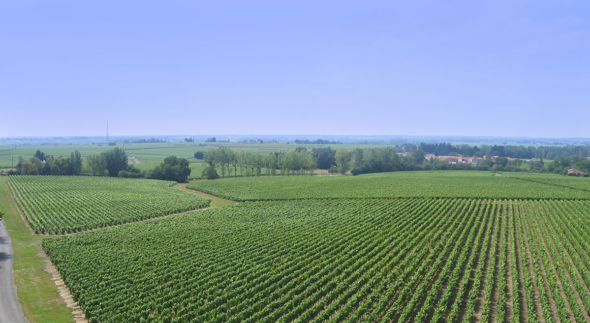 vignes château du cléray