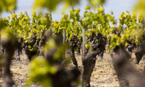 Vignobles du Val de Loire