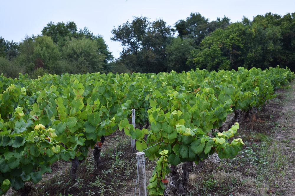 Parcours du Vignes Vins Randos 2017