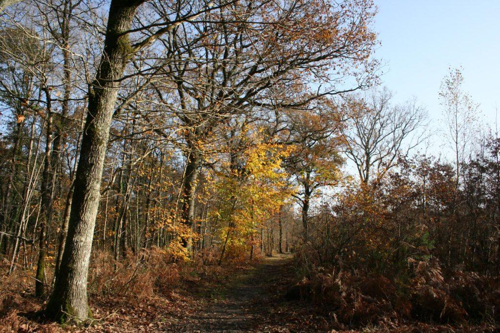 Forêt du Touffou