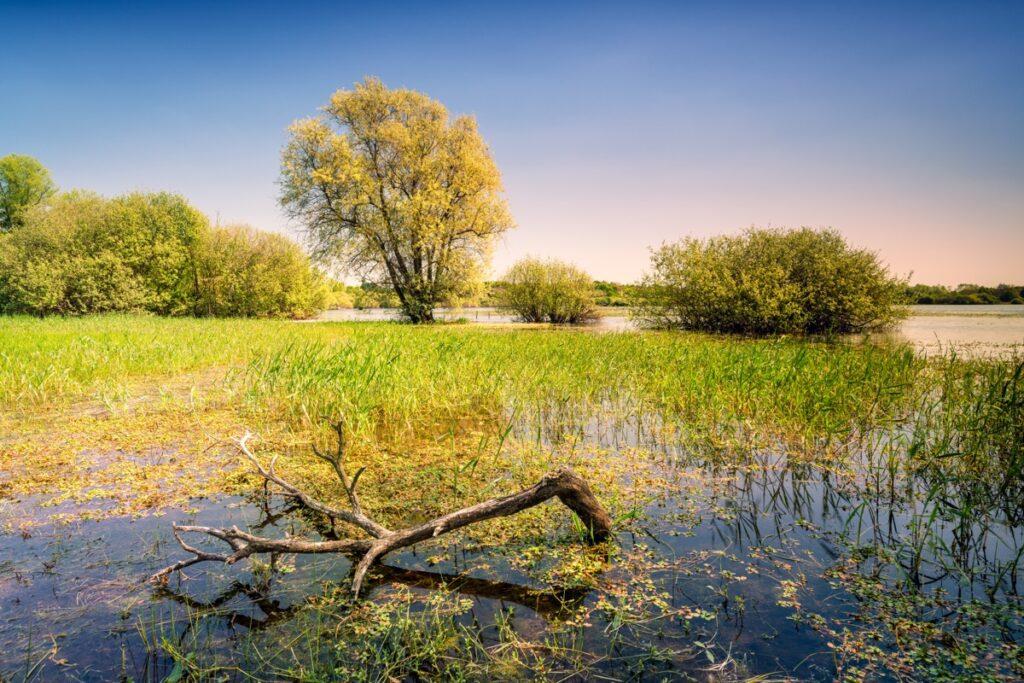 Le lac de Grand-Lieu à Pierres Aigues à Saint-Aignan de GrandLieu ©A-Bertrande