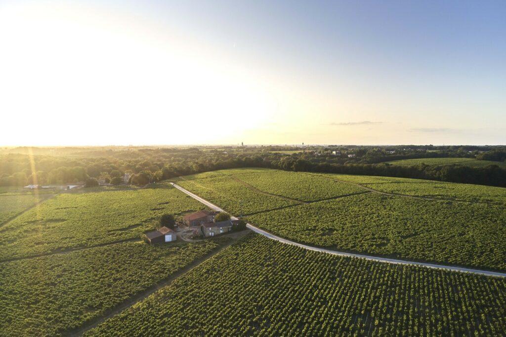 Les vignes de Saint-Fiacre @A. Lamoureux