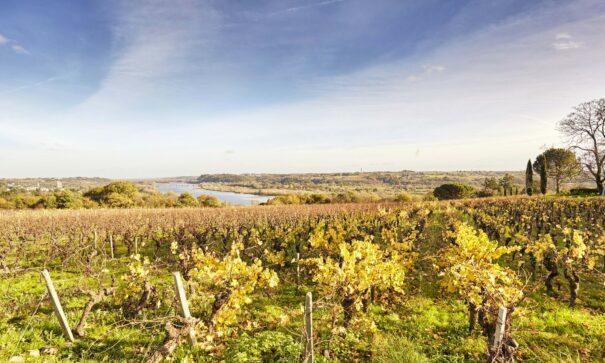 La Loire au domaine des Génaudières au Cellier @A. Lamoureux